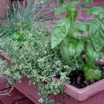 5 Proven Mixed Herb Pots or Window Boxes