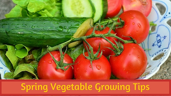 spring vegetable growing tips from bouquet garni nursery